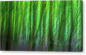 Abstract Forest Canvas Print by Martin Newman