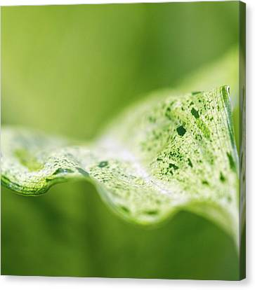 Abstract Leaf Canvas Print by Julie Rideout