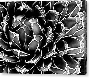 Abstract Succulent Canvas Print by Ranjini Kandasamy