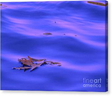 Afloat Canvas Print by Sybil Staples