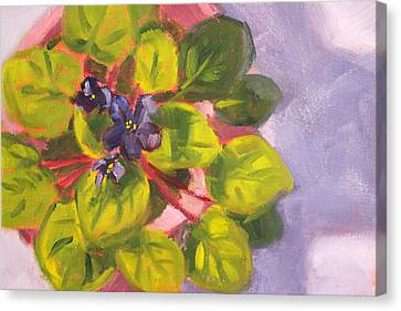 African Violet Still Life Oil Painting Canvas Print by Nancy Merkle