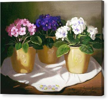 African Violets Canvas Print by Linda Jacobus
