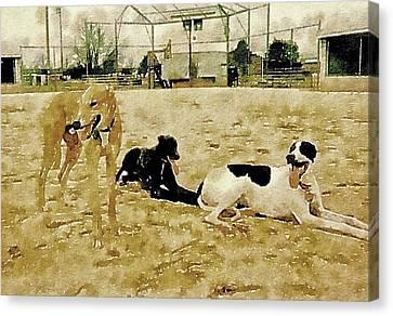 After A Good Run Canvas Print by Susan Maxwell Schmidt