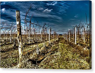 After The Harvest Canvas Print by William Norton