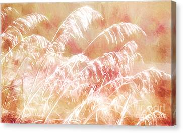 Afterglow II Canvas Print by Dan Carmichael