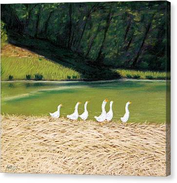 Afternoon On Goose Pond Canvas Print by Jan Amiss