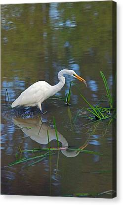 Ah... Breakfast Canvas Print by Randall Ingalls