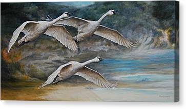 Ahead Of The Storm - Trumpeter Swans On The Move Canvas Print by Rob Dreyer AFC
