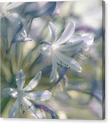Airy Fairy Canvas Print by Alexander Kunz