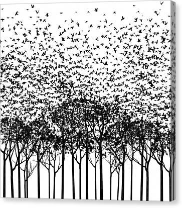 Aki Monochrome Canvas Print by Cynthia Decker