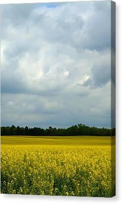 Alabama Canola Crop Canvas Print by Kathy Clark
