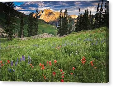 Albion Basin Wildflowers Canvas Print by Utah Images