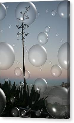 Alca Bubbles Canvas Print by Holly Ethan