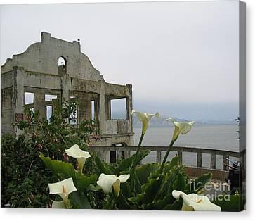 Alcatraz Flowers Canvas Print by Frederick Holiday