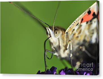 Alien Painted Lady Canvas Print by Andy Smy