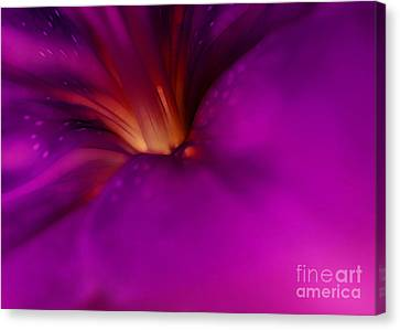 All I Need Is A Miracle Canvas Print by Krissy Katsimbras