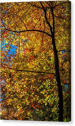 All The Colors 2 Canvas Print by Claus Siebenhaar