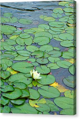 Flowers Canvas Print featuring the photograph Alone by Roberto Alamino