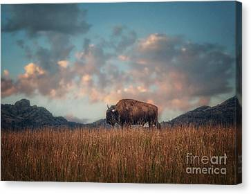 Alone  Canvas Print by Tamyra Ayles
