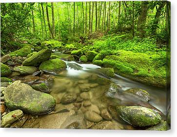 Along The Banks Of The Roaring Fork Canvas Print by Stephen Stookey