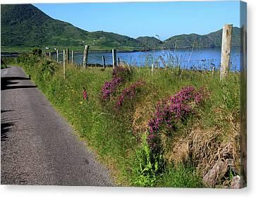Along The Kerry Way Canvas Print by Aidan Moran