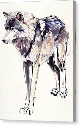 Alpha Canvas Print by Mark Adlington