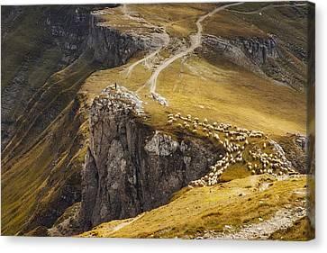 Alpine Pastures Canvas Print by Mihai Ian Nedelcu