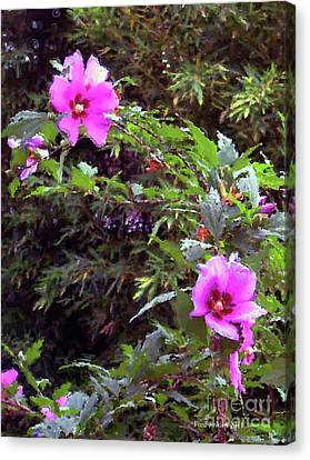 Althea Canvas Print by Fred Jinkins
