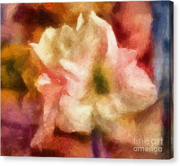 Amaryllis Colori Canvas Print by Lutz Baar