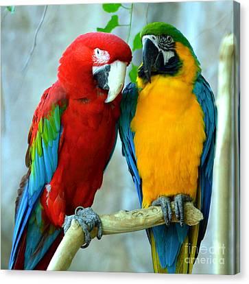 Amazon Parrots Canvas Print by Dani Stites