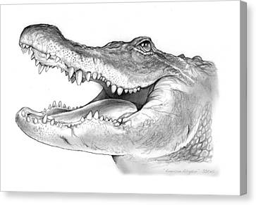 American Alligator Canvas Print by Greg Joens