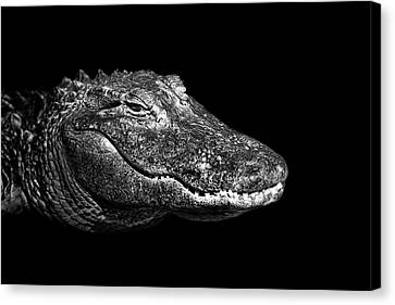 American Alligator Canvas Print by Malcolm MacGregor