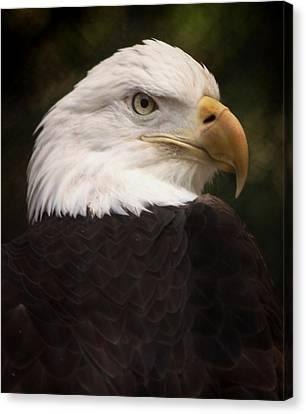 American Bald Eagle Canvas Print by Joseph G Holland