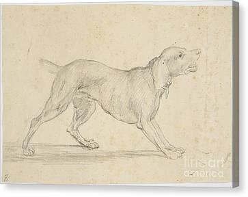 American Barking Dog In Profile Canvas Print by Washington Allston