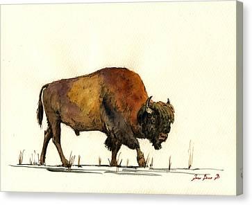 American Buffalo Watercolor Canvas Print by Juan  Bosco