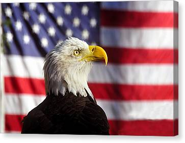 American Eagle Canvas Print by David Lee Thompson