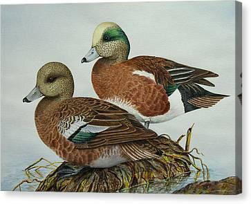 American Widgeons Canvas Print by Elaine Booth-Kallweit