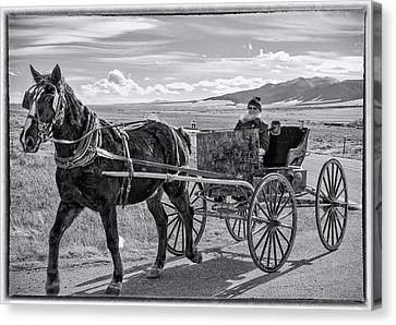 Amish Buggy Driver Canvas Print by John Bartelt