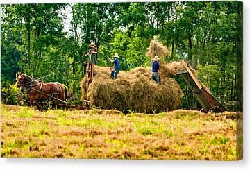 Amish Harvest 2 - Paint Canvas Print by Steve Harrington