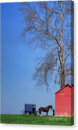 An Amish Scene Canvas Print by Olivier Le Queinec