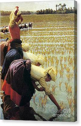 An Italian Rice Field Canvas Print by Angelo Morbelli