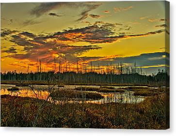An November Sunset In The Pines Canvas Print by Louis Dallara