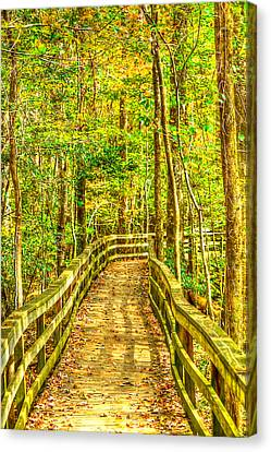 An Old Growth Bottomland Hardwood Forest Canvas Print by Don Mercer