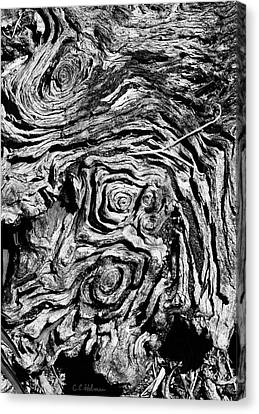 Ancient Stump Canvas Print by Christopher Holmes