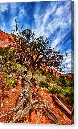 Ancient Wisdom Canvas Print by Bill Caldwell - ABeautifulSky Photography