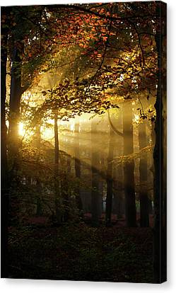 And Then There Was Light - Autumn Forest Canvas Print by Roeselien Raimond