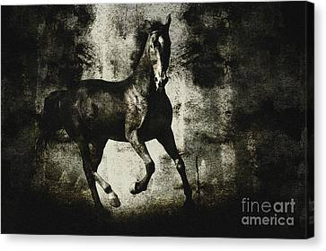 Andalusian Horse Canvas Print by Dimitar Hristov