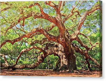 Angel Oak - Charleston Sc  Canvas Print by Drew Castelhano