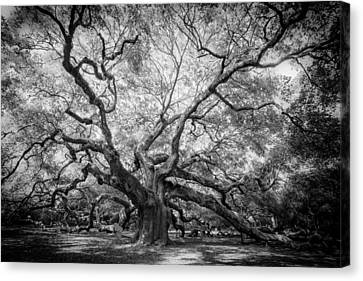 Angel Oak Canvas Print by Rob Travis
