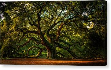 Angel Oak Canvas Print by Taylor Franta